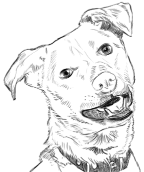 Hundeportrait zeichnen - Schritt 2