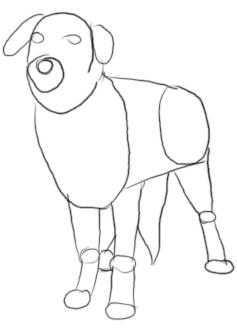 Hunde Zeichnung - Schritt 2