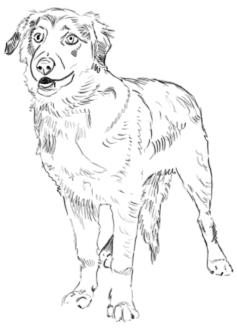Hunde Zeichnung - Schritt 3