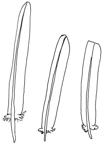 Federart: Armschwingen Federn
