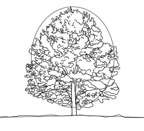 Baum zeichnen Tutorial Schritt 2