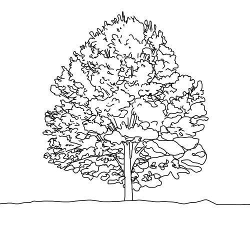 Baum zeichnen Tutorial Schritt 3