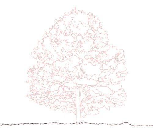 Baum zeichnen Tutorial Schritt 4