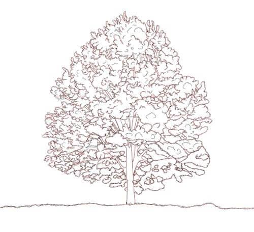 Baum zeichnen Tutorial Schritt 5