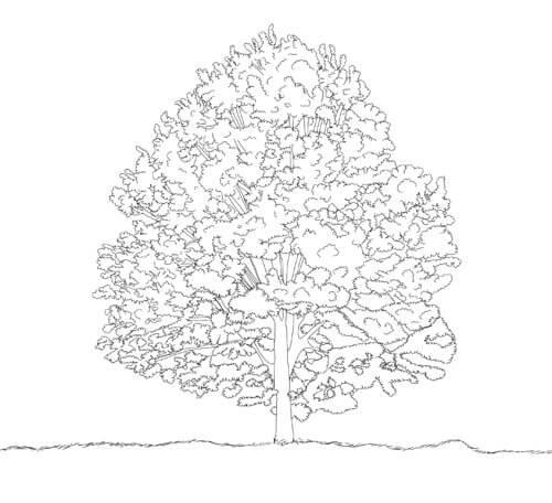 Baum zeichnen Tutorial Schritt 6