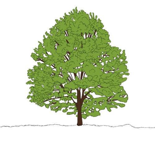 Baum zeichnen Tutorial Schritt 7