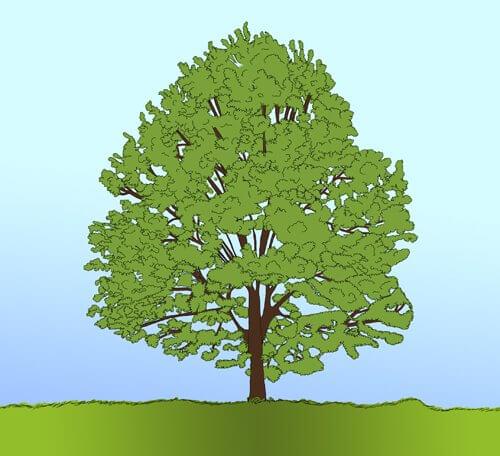 Baum zeichnen Tutorial Schritt 8