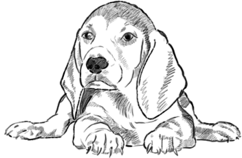 Beagle Welpe zeichnen - Schritt 2