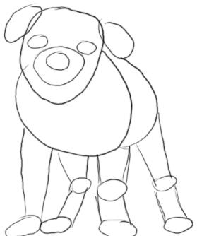 Bulldogge zeichnen - Schritt 2