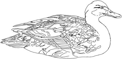 Ente Zeichnung