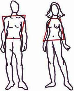 Trapez- und Dreieckform bei Männern und Frauen