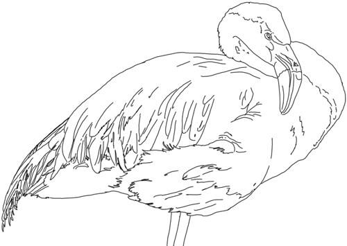 Flamingo Zeichnung