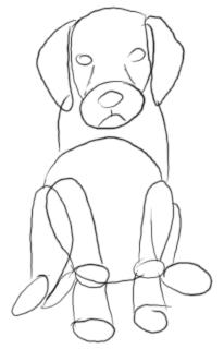 Golden Retriever Welpe zeichnen - Schritt 2