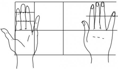 Hand von oben und von unten mit Hilfslinien