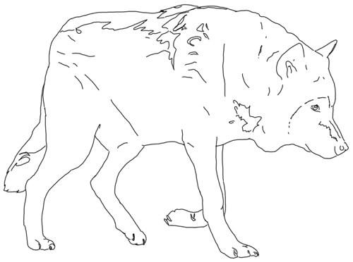 Kauernden Wolf zeichnen