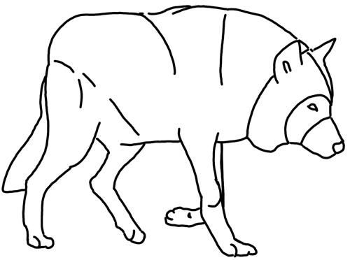 Wölfe und Wildhunde: Kauernden Wolf Skizze