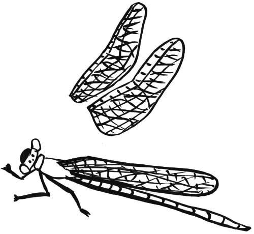Libellenflügel Skizze