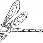 Libellenflügel seitlich nach oben Skizze