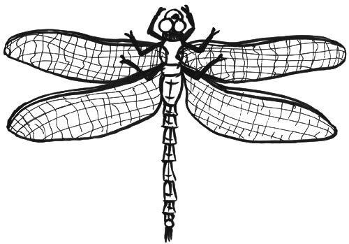 Libelle von oben Skizze