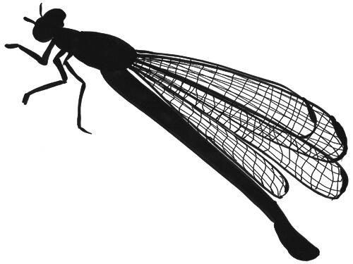Libellenflügel von der Seite Skizze