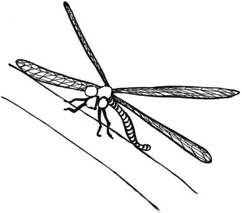 Libellenflügel von vorne Skizze