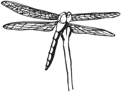 Libelle von vorne unten Skizze