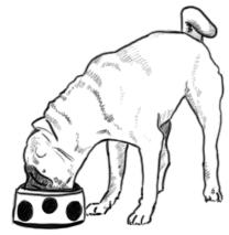 Mops frisst aus Napf zeichnen - Schritt 2