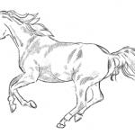 Pferd galoppiert Zeichnung