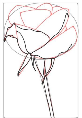 Rose zeichnen Schritt 4