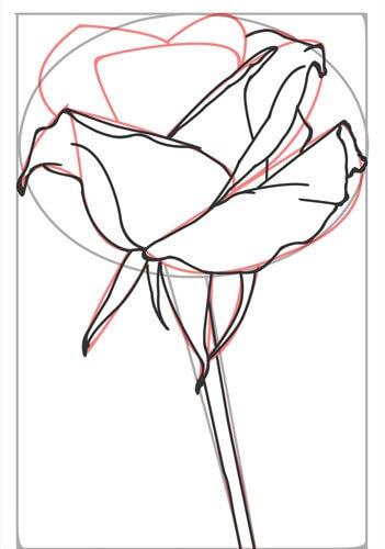 Rose zeichnen Schritt 5