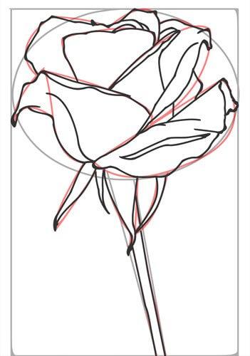 Rose zeichnen Schritt 6