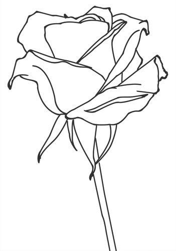 Rose zeichnen Schritt 7