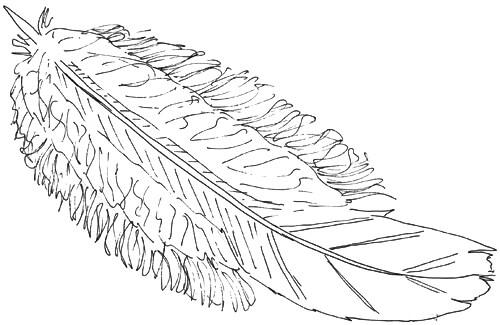 Vogelfeder Skizze 3