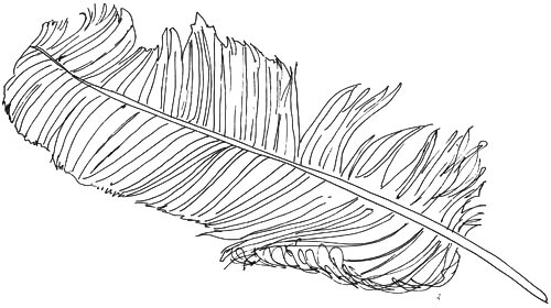Vogelfeder Skizze 2