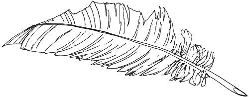 Vogelfeder Skizze 1