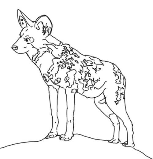 Wildhund Zeichnung