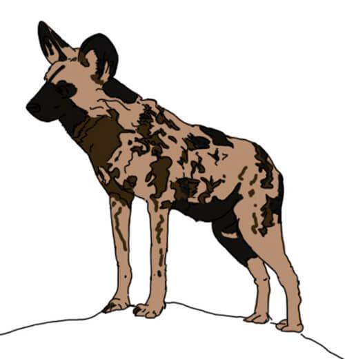 Wildhund Zeichnung koloriert