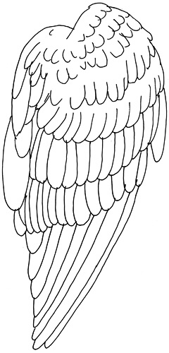 Vogelflügel von der Seite - eingezeichnete Federn