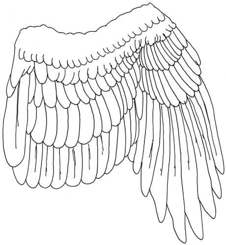 Vogelflügel angezogen Seitenansicht - Eingezeichnete Federn