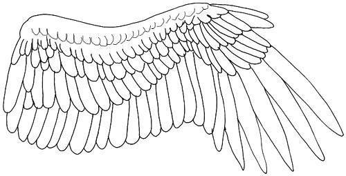 Ausgestreckter Vogelflügel Außenseite - Eingezeichnete Federn
