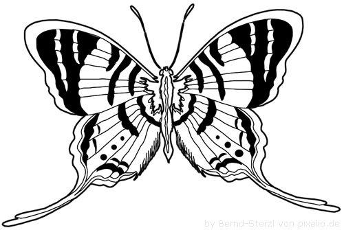 Schmetterlingsflügel Beispielzeichnung 1