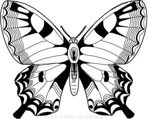 Flügel Beispielzeichnung 2