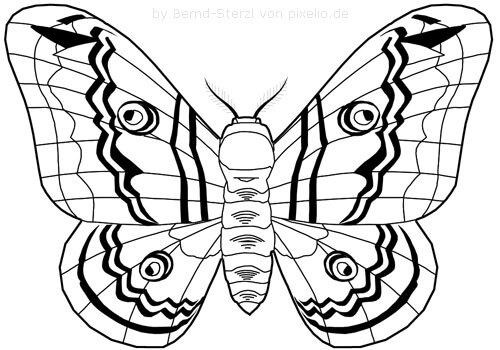 Schmetterlingsflügel Beispielzeichnung 3