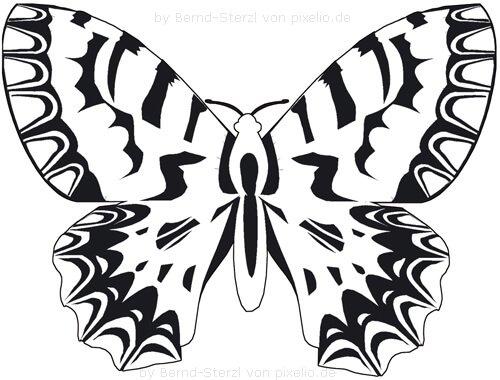 Schmetterlingsflügel Beispielzeichnung 5