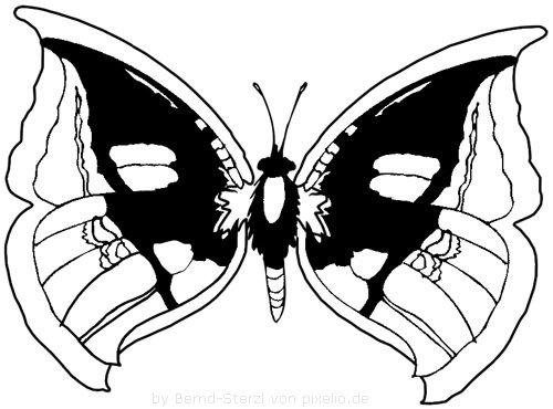 Schmetterling Beispielzeichnung 6
