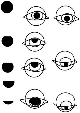 Augen und Augapfel hinterm Augenlid