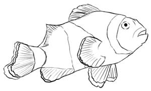 Fische und Haie: Clownfisch Zeichnung