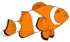 Clownfisch Kolorierung