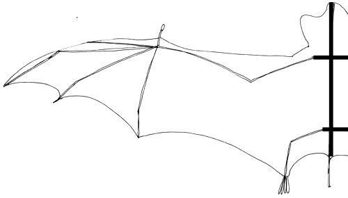 Fledermaus Flügel Aufbau