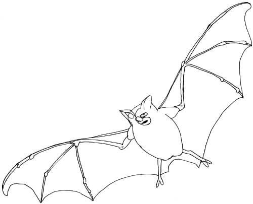 Fliegende Fledermaus Skizze